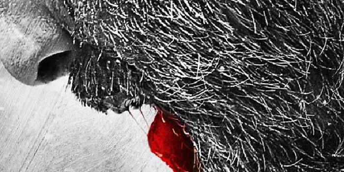 Sanjay Dutt releases the first look of his comeback movie 'Bhoomi'.